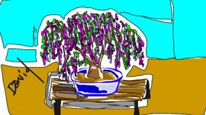 David-bonsai-03-29-16